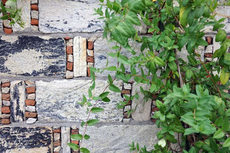 old wall made of natural stone and brick and climbing plant. design