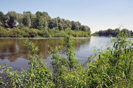 Landscape overlooking the river on a calm summer day. Pripyat River - the pearl of Belarusian Polesye Banque d'images