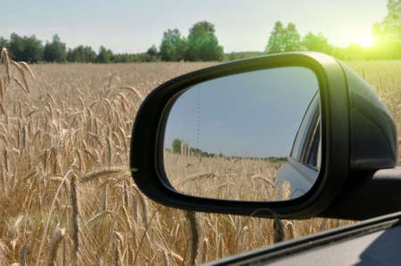View of the rye field from inside the car. Rearview mirror
