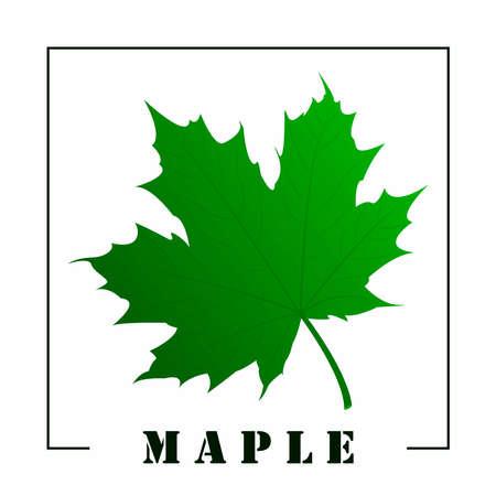 Maple Leaf Flat Icon On White Background