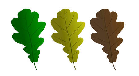 Set of vector maple leaves of different colors. Illustration