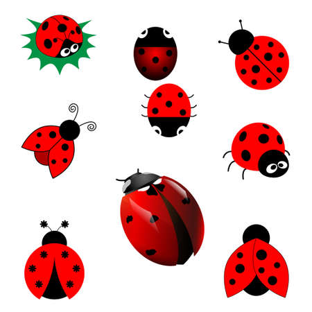 set of ladybugs Vector
