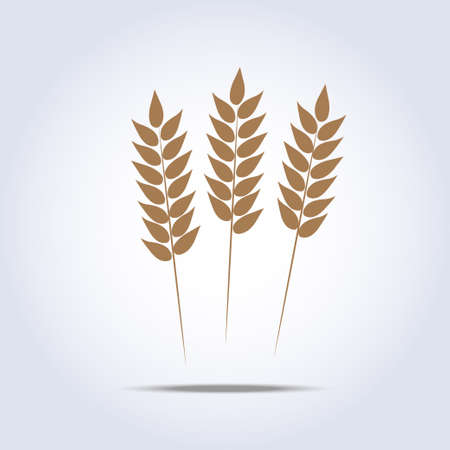 fu�sohle: Weizen-Symbol. Vektor-Illustration Illustration
