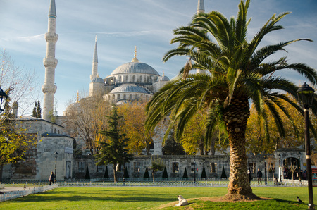 Sultan Ahmet Camii named Blue Mosque turkish islamic landmark and palms nearby, Istanbul, Turkey