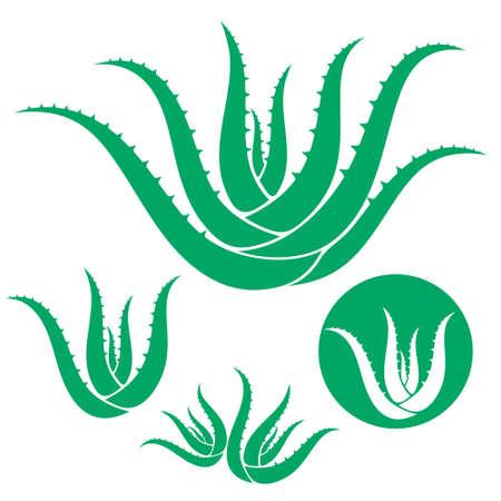 aloe vera: Aloe