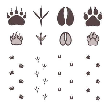 huellas de animales: Impresión de la pata
