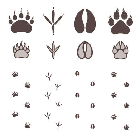 paw prints: Paw Print Illustration