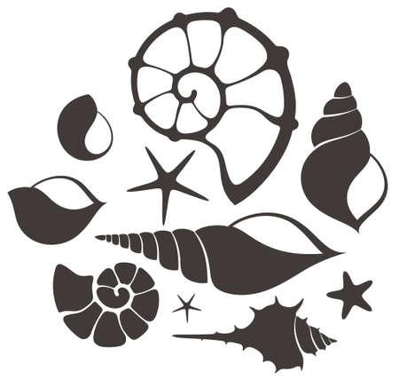 Shell  Set Illustration