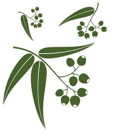 Eucalyptus Ilustracja