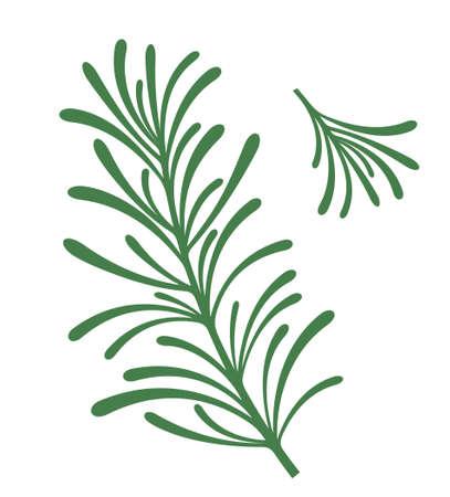 Rosemary  Illustration