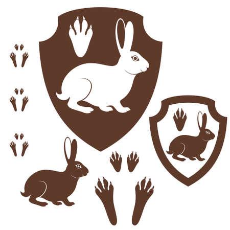 lapin blanc: Empreinte de li�vre
