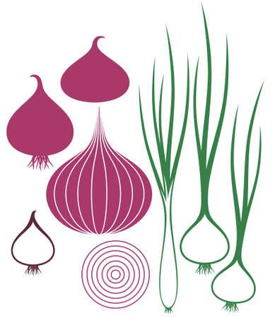 onion: Onion