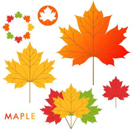 maple leaf: Maple