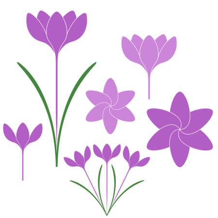 saffron: Saffron