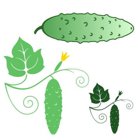 cucumber: Cucumber