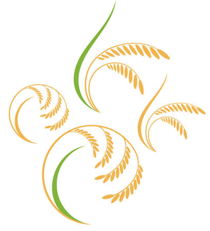 rice harvest: Rice