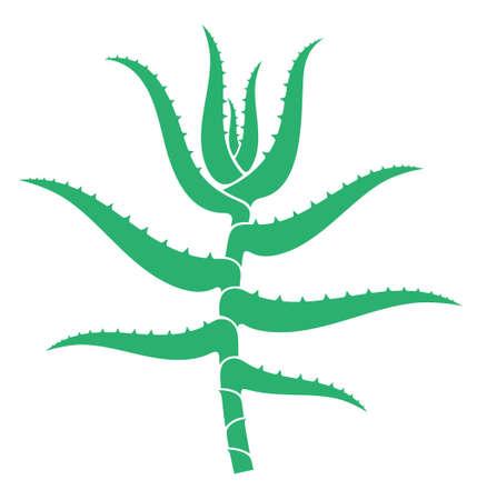 aloe: Aloe