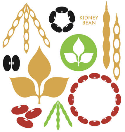 kidney bean: Kidney Bean  Illustration