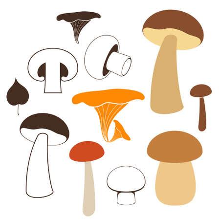 champignon: Mushrooms  Illustration