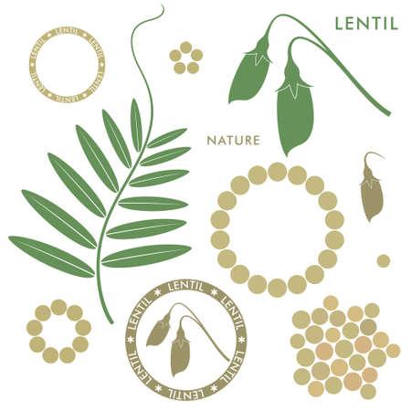 Lentil illustration