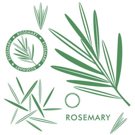 Rosemary on white
