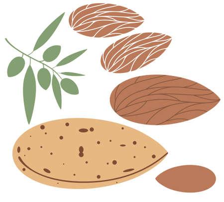 amande: Almond sur blanc