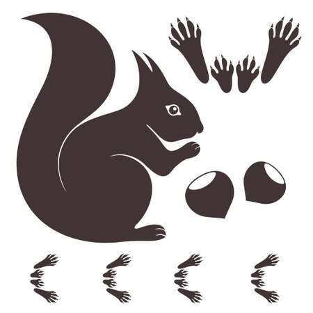Eekhoorn op wit