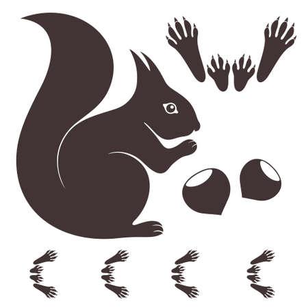 Squirrel on white