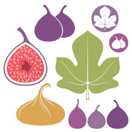purple fig: Fig Set