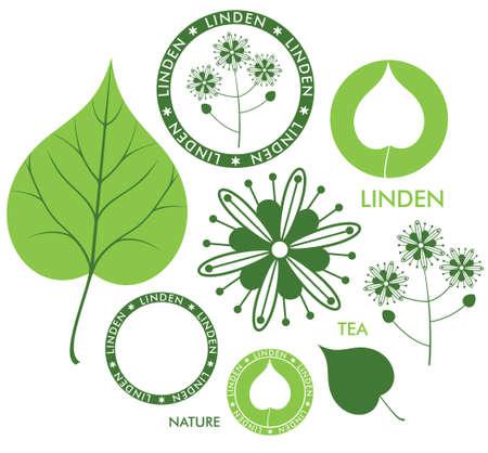 linden flowers: Linden