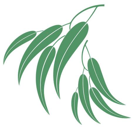Eucalyptus Ilustração