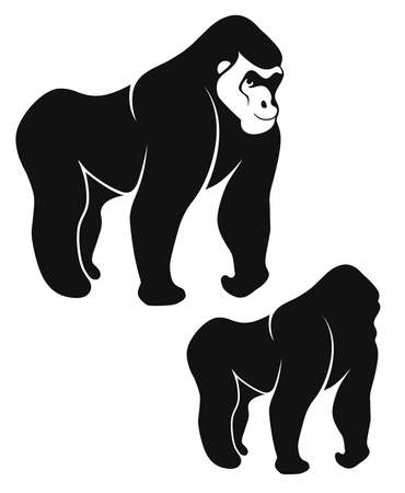 silverback: Gorilla illustration