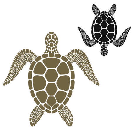 sea turtle: Turtle illustration