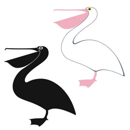 Pelican illustrations Vector