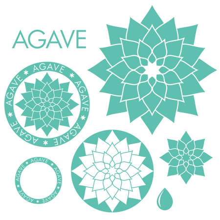 Agave illustrations
