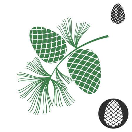 pomme de pin: Pomme de pin