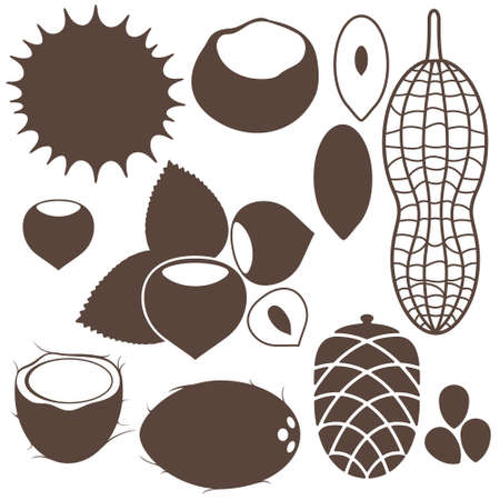 pine cone: Nuts