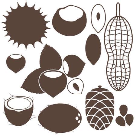 pine nuts: Nuts