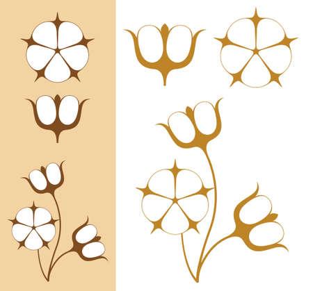 Cotton  illustration Vector