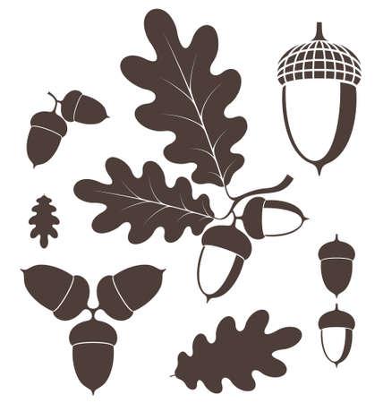 Oak. Eichel Standard-Bild - 32144758