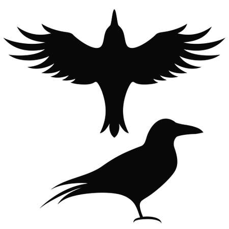 raven: silhouette Raven Illustration