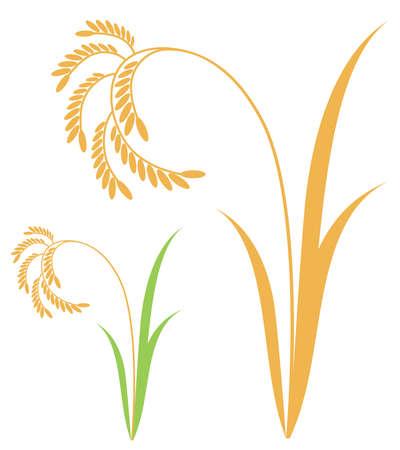 arrozal: Icono de la planta de arroz Vectores