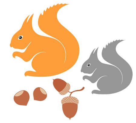 acorn squirrel: Squirrel