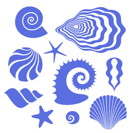 scallop shell: Shell Illustration