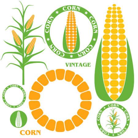 トウモロコシ。セット  イラスト・ベクター素材