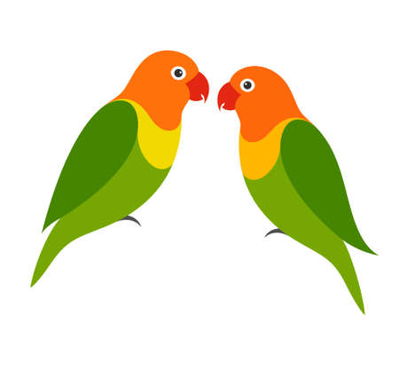 green parrot: Parrot. Lovebird