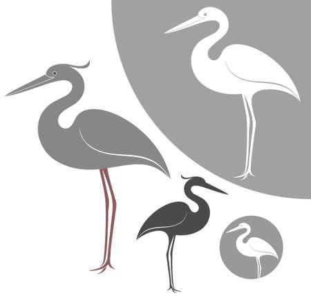 grey heron: Heron