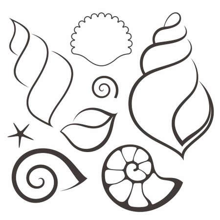 seashell: Shell. Set Illustration