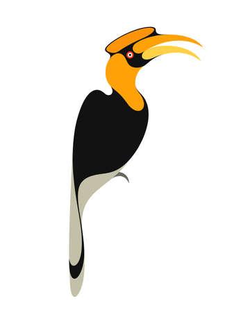 hornbill: Hornbill on white  Illustration