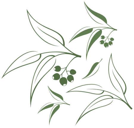 Eucalyptus illustration   イラスト・ベクター素材